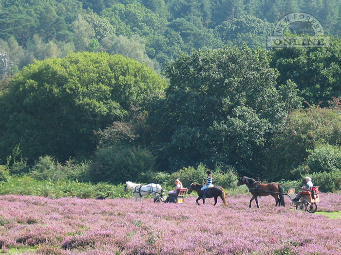 Horseriding in the New Forest